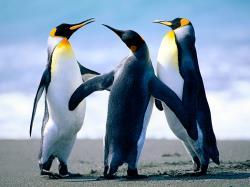 PinguPower